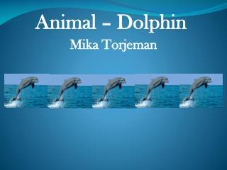 Animal – Dolphin