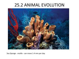 25.2 ANIMAL EVOLUTION