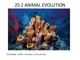 25.2 ANIMAL EVOLUTION