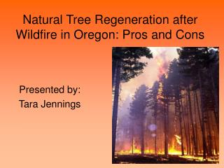 Natural Tree Regeneration after Wildfire in Oregon: Pros and Cons