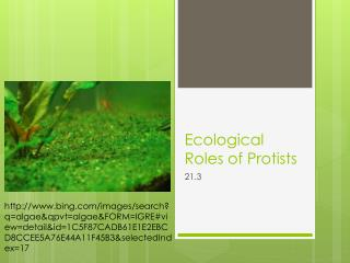 Ecological Roles of  Protists