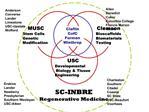 MUSC  Stem Cells     Genetic Modification