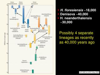 H. floresiensis  ~18,000 Denisova ~40,000 H. neanderthalensis ~30,000