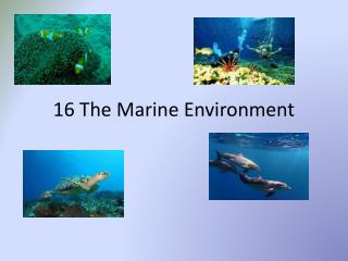 16 The Marine Environment