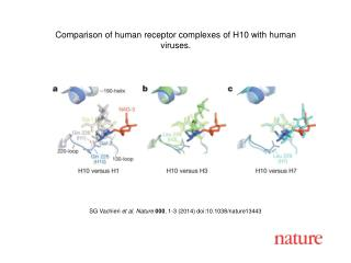 SG  Vachieri et al. Nature  000 , 1-3 (2014)  doi:10.1038/nature13443