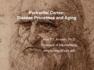 Prefrontal Cortex:  Disease Processes and Aging