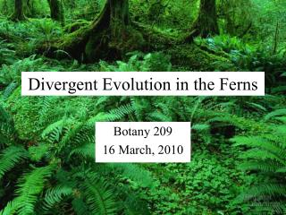 Divergent Evolution in the Ferns