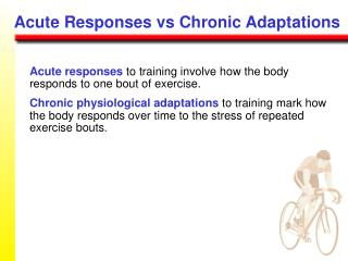Acute responses to training involve how the body responds to one bout of exercise.