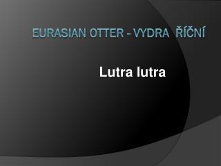 Eurasian Otter  - Vydra   říční
