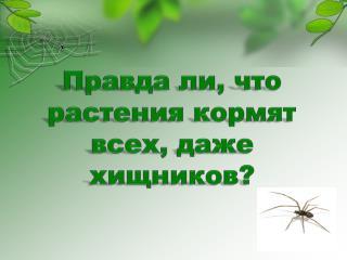 Правда ли, что растения кормят всех, даже хищников?