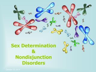 Sex Determination &  Nondisjunction Disorders