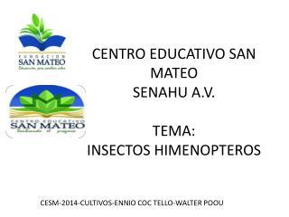 CENTRO EDUCATIVO SAN  MATEO SENAHU A.V. TEMA: INSECTOS HIMENOPTEROS