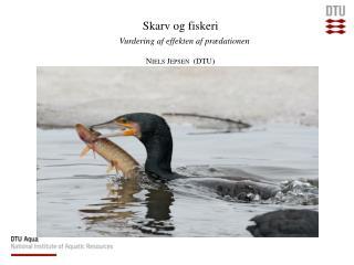 Skarv og fiskeri  Vurdering af effekten af prædationen Niels Jepsen  (DTU)