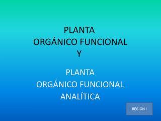 PLANTA  ORGÁNICO FUNCIONAL Y