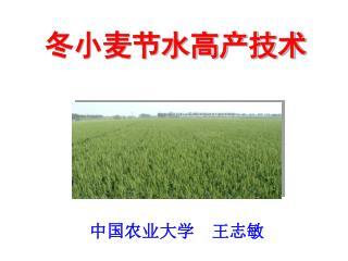 中国农业大学  王志敏