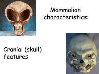 Mammalian  characteristics: