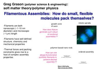 Greg Grason  (polymer science & engineering) :  soft matter theory/polymer physics