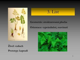 3. List