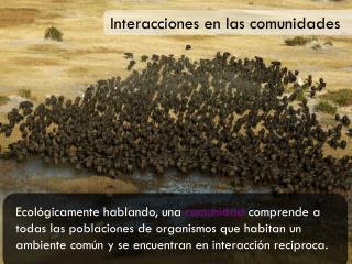 Interacciones en las comunidades