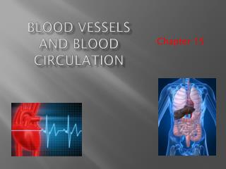 Blood Vessels and Blood Circulation
