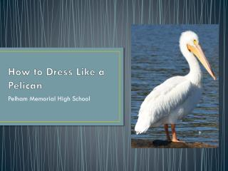 How to Dress Like a Pelican