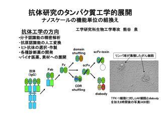 scFv-toxin