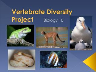 Vertebrate Diversity Project