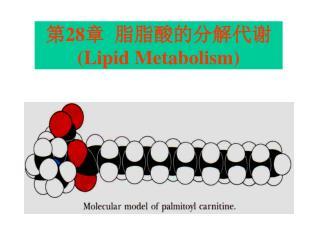 第 28 章  脂脂酸的分解代谢 (Lipid Metabolism)