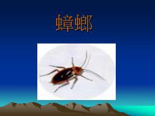 室 內常見的蟑螂約有八種即 德國蟑螂 、 美洲蟑螂 、 澳洲蟑螂 、 棕色蟑螂 、 花斑蟑螂 、 潛伏蟑螂 、 灰色蟑螂 、及東方蟑螂。