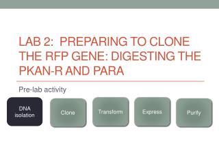 Lab 2:  Preparing to clone the RFP gene: digesting the  pKAN -R and  pARA