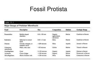 Fossil Protista