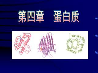 第四章  蛋白质