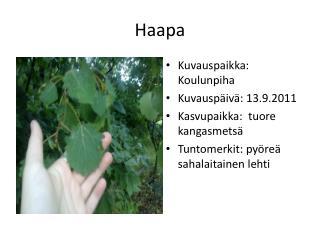 Haapa