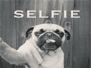- Selfies are often shared on social networking services such as Instagram, Snapchat, and Tumblr