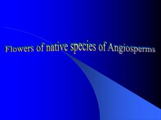 Flowers of native species of Angiosperms