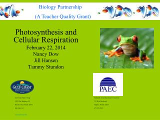 Photosynthesis and Cellular Respiration February 22, 2014 Nancy Dow Jill Hansen Tammy Stundon