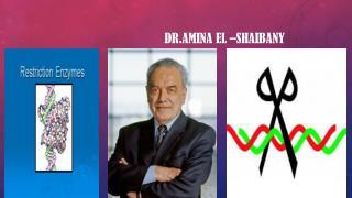 Dr.AMINA  EL –SHAIBANY