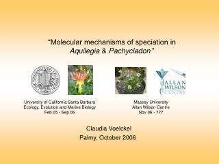 """Molecular mechanisms of speciation in  Aquilegia  &  Pachycladon """
