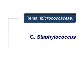 G.  Staphylococcus