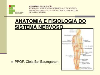 ANATOMIA E FISIOLOGIA DO SISTEMA NERVOSO PROF. Cléia Bet Baumgarten