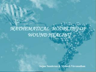 MATHEMATICAL  MODELING OF WOUND HEALING