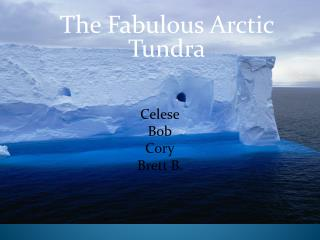 The Fabulous Arctic Tundra .