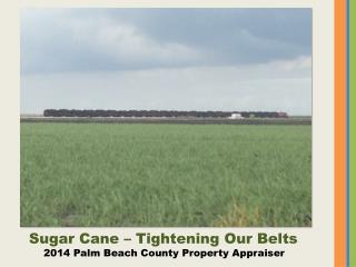 Sugar Cane – Tightening Our Belts 2014 Palm Beach County Property Appraiser