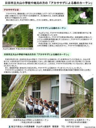 日田市立大山小学校や地元の方の「アカササゲによる緑のカーテン」