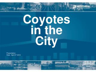 Coyotes  in the  City