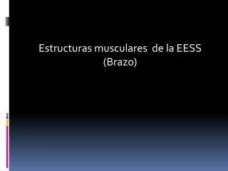 Estructuras musculares  de la EESS (Brazo)