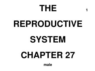 THE             1 REPRODUCTIVE SYSTEM CHAPTER 27 male