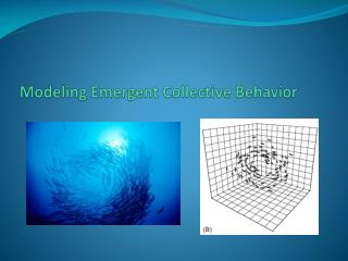 Modeling Emergent Collective Behavior
