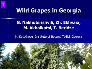Wild Grapes in Georgia