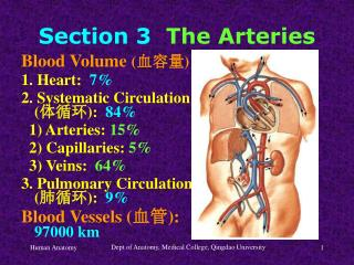 Section 3 The Arteries